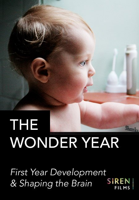 The Wonder Year - 1st year & shaping the brain